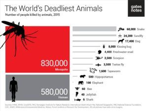 killed-by-animals